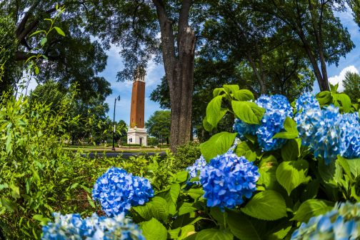 Summer Day on Campus